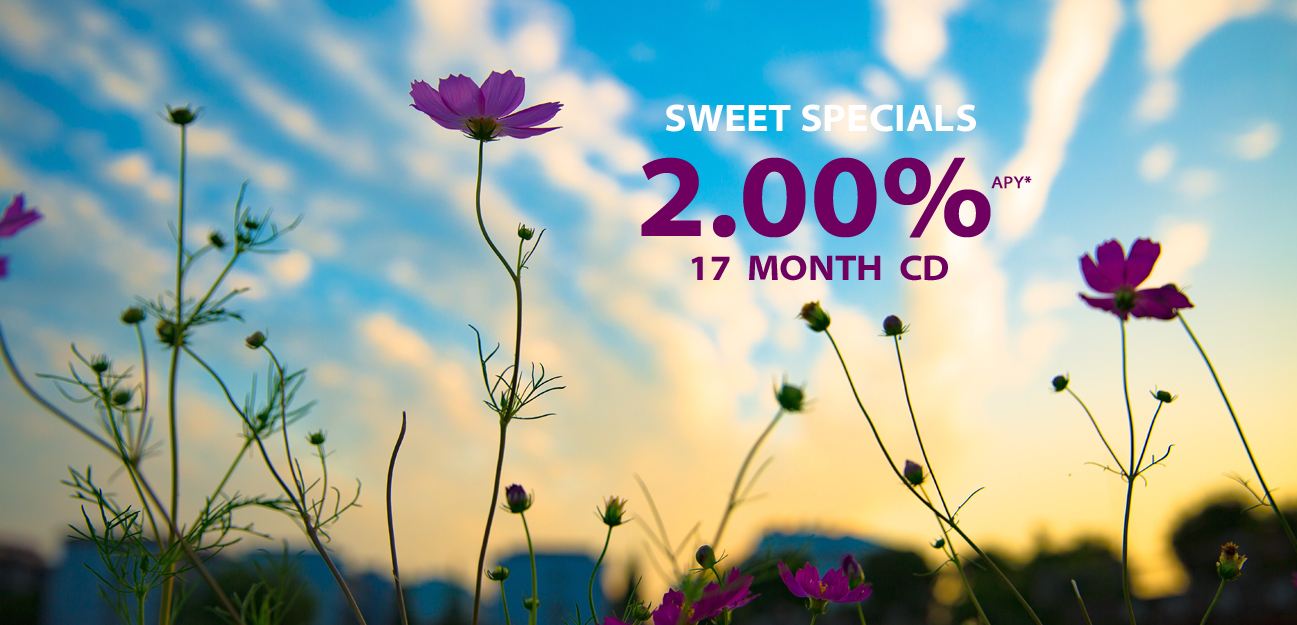Sweet June CD Specials